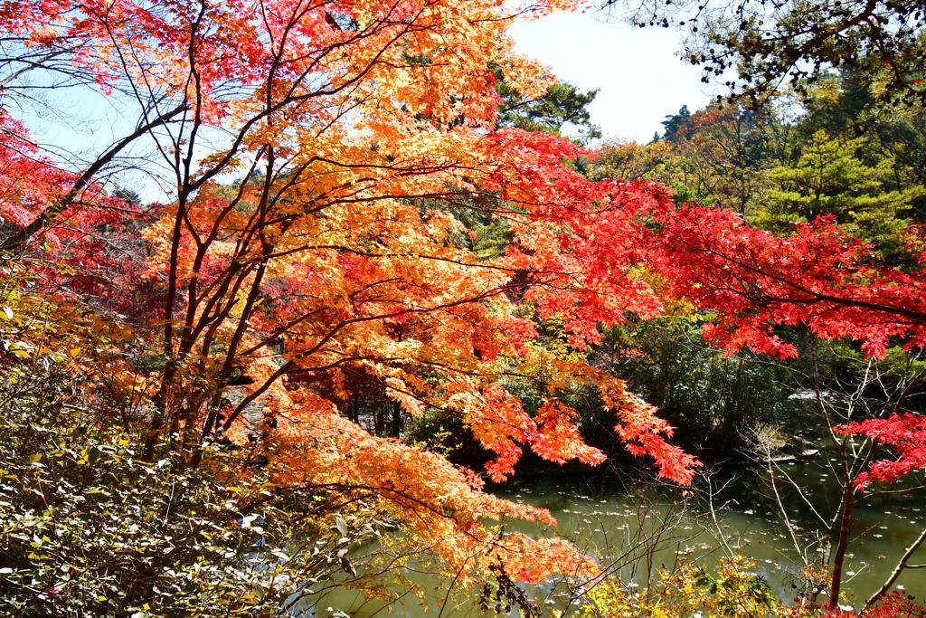 神戸市立森林植物園②