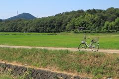 真夏の自転車