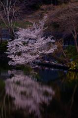 桜のもとで