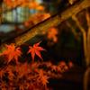京都 冬支度