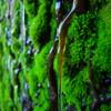 苔と清らかな水