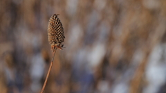 冬枯れの花 -02