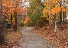 紅葉の木道