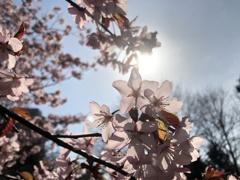 まぶしい春空