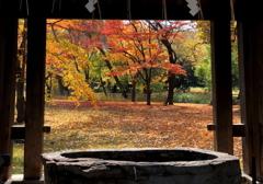 中島 その先の秋 -2