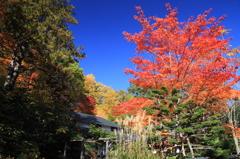 東屋と紅葉