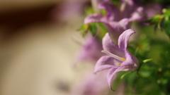 ままのお花
