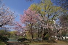 中島公園-1