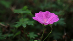 パットひと花