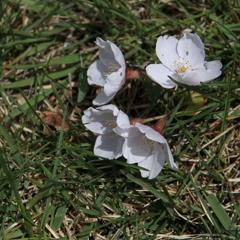 春の落とし物