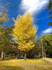 中島の秋-4