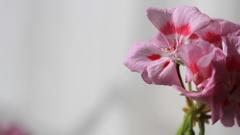 目指すは開花、じゃないつぼみの開花