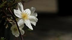 4月の温室