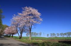 北の大地の春