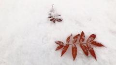 雪の降った朝は