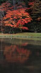 紅桜公園-2