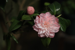 4月の頃 温室の花 百合が原