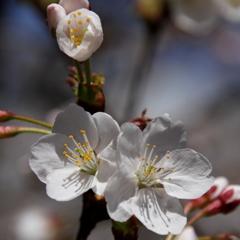 春のおすそわけ