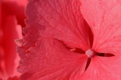 フラミンゴ カラー
