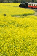 Yellow Carpet #02