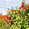 「木春」こそ「春」の花