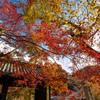 福岡秋月の紅葉2020 その7