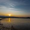 大麦収穫の後の田植え3