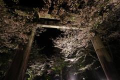 竈門神社と桜