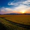 夕焼けの麦畑 3