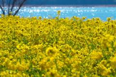 春のキラメキ