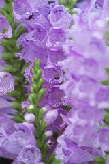 紫の小部屋