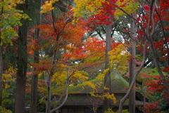 本土寺の紅葉 (ロ)