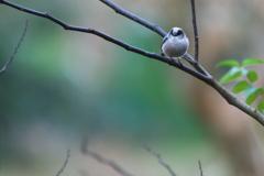 11月⋙手賀沼の野鳥達(8)