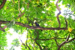 KLで初の野鳥撮影