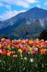 武甲山とチューリップ