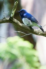 Blue Bird(2)