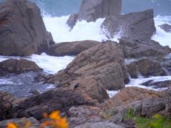 岩場のイソヒヨドリ