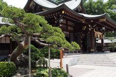 五葉の松と出水神社