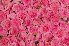 100本の薔薇 - ハイレゾショット -