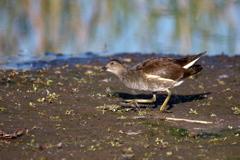 11月⋙手賀沼の野鳥達(7)