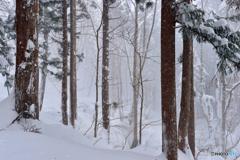 雪積もる世界