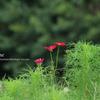 風景写真 名古屋 花