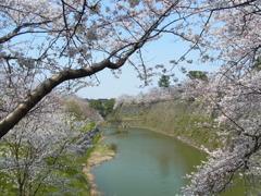 桜からお堀を覗く。