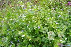 春の草花詰め合わせ