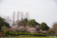 大和民俗公園の春