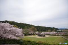 石舞台の春