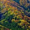 色とりどりの森②