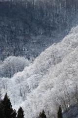 ようやく訪れた降雪期