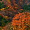 ふかふかな秋の森