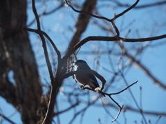 冬の野鳥撮影